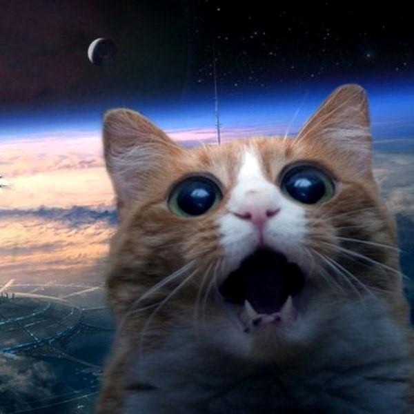 NASA, космос, астрономия, планета, рецензия, соцсети, поп-культура, общество, «Тупак», «Соня» и «Стесняшка»: в сети придумывают названия экзопланетам, обнаруженным NASA